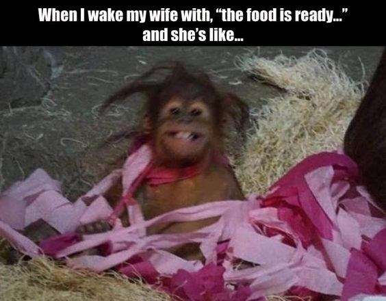 """Orangutan - When I wake my wife with, """"the food is ready..."""" and she's like..."""