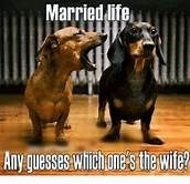 Dog - Married life Any guesses Which.one's the wife?