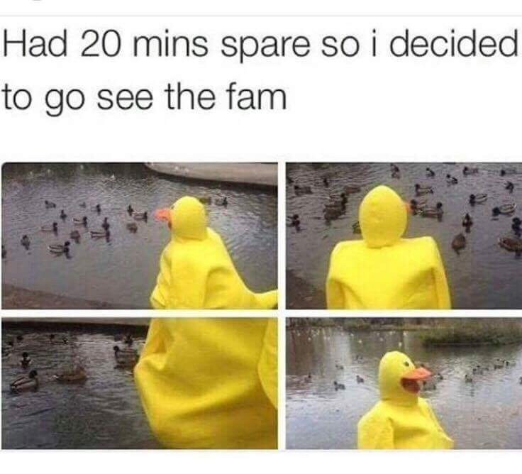 meme with person in duck suit visiting a lake of ducks