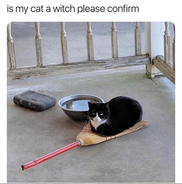 "Pic of a cat lying on top of a broom with the caption, ""Is my cat a witch please confirm"""