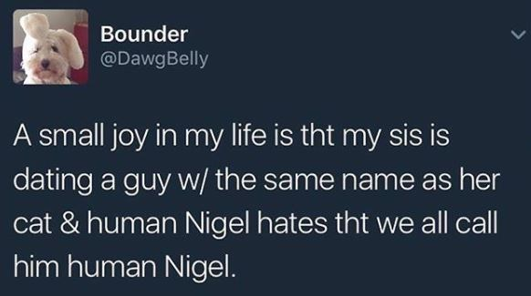 cat meme - Text - Bounder @DawgBelly A small joy in my life is tht my sis is dating a guy w/ the same name as her cat & human Nigel hates tht we all call him human Nigel.