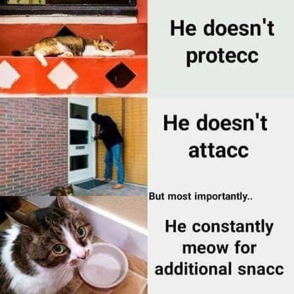 cat meme - Cat - He doesn't protecc He doesn't attacc But most importantly. He constantly meow for additional snacc
