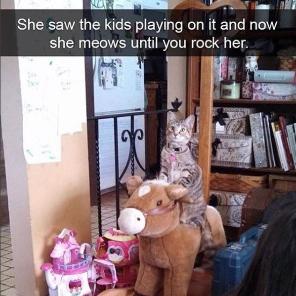 cat meme - Product - She saw the kids playing on it and now she meows until you rock her YYWW
