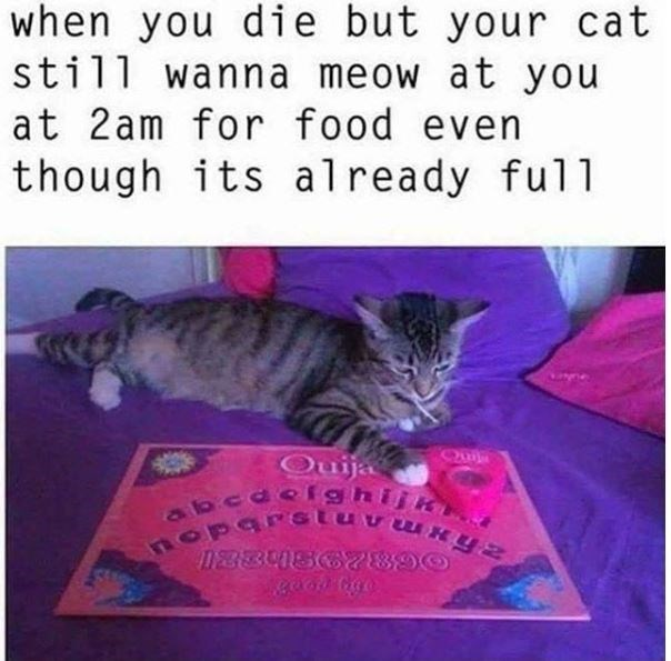 cat meme - Text - when you die but your cat still wanna meow at you at 2am for food even though its already full Quija alo cdeig DEBBUSC2890
