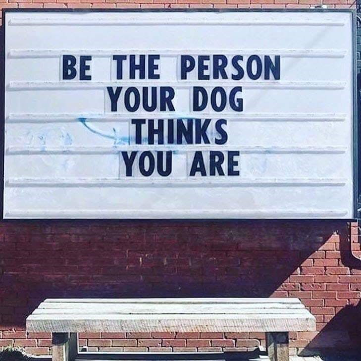 happy meme about being the kind of person your dog thinks you are