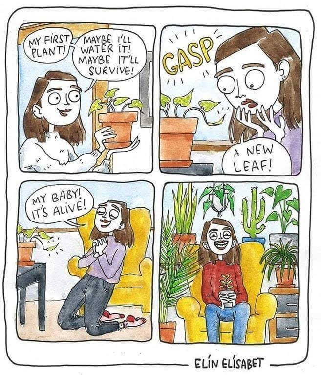 happy meme about a plant that is growing successfully