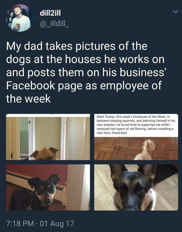 happy meme of a man that posts dogs as the employee of the week