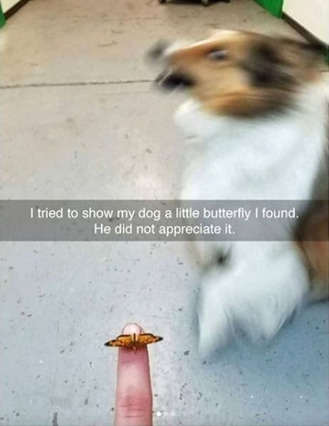 Canidae - I tried to show my dog a little butterfly I found. He did not appreciate it.