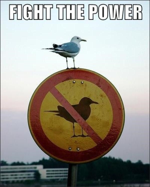 Bird - FIGHT THE POWER