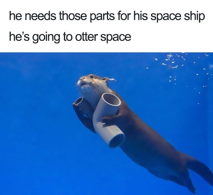 Marine mammal - he needs those parts for his space ship he's going to otter space