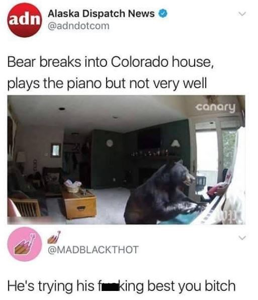 Product - adn Alaska Dispatch News @adndotcom Bear breaks into Colorado house, plays the piano but not very well canary @MADBLACKTHOT He's trying his fiking best you bitch
