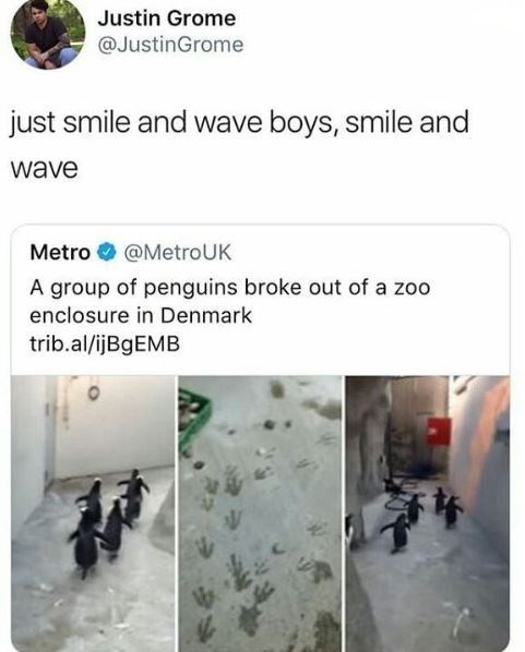 Product - Justin Grome @JustinGrome just smile and wave boys, smile and wave Metro @MetroUK A group of penguins broke out of a zoo enclosure in Denmark trib.al/ijBgEMB P
