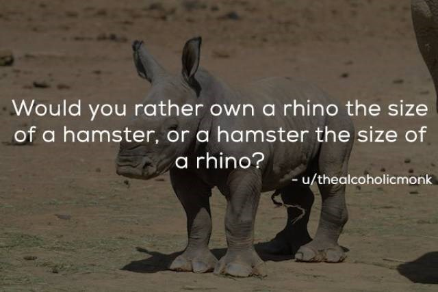 Vertebrate - Would you rather own a rhino the size of a hamster, or a hamster the size of a rhino? -u/thealcoholicmonk
