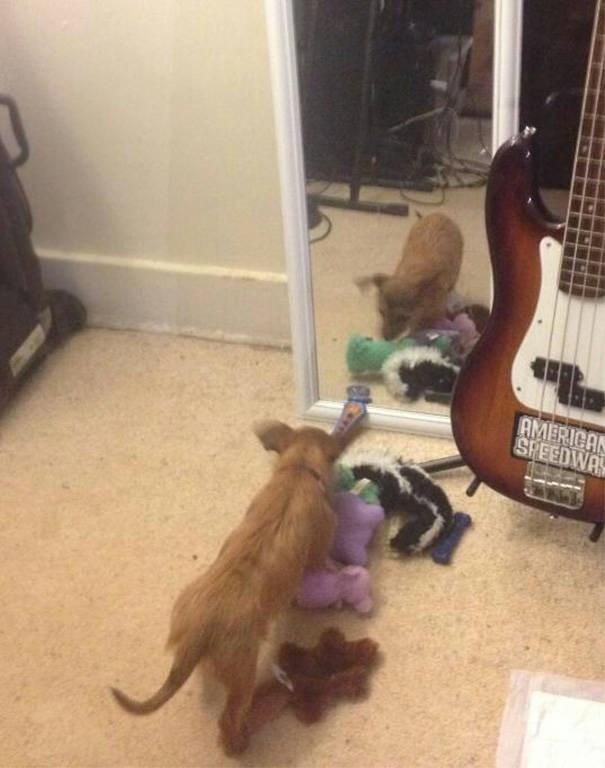 Guitar - AMERICA SPEEDWAY