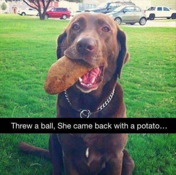 Dog - Threw a ball, She came back with a potato...