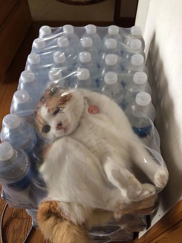 Cat inside bottles of water