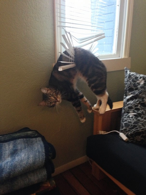 cat stuck in the vertical blinds