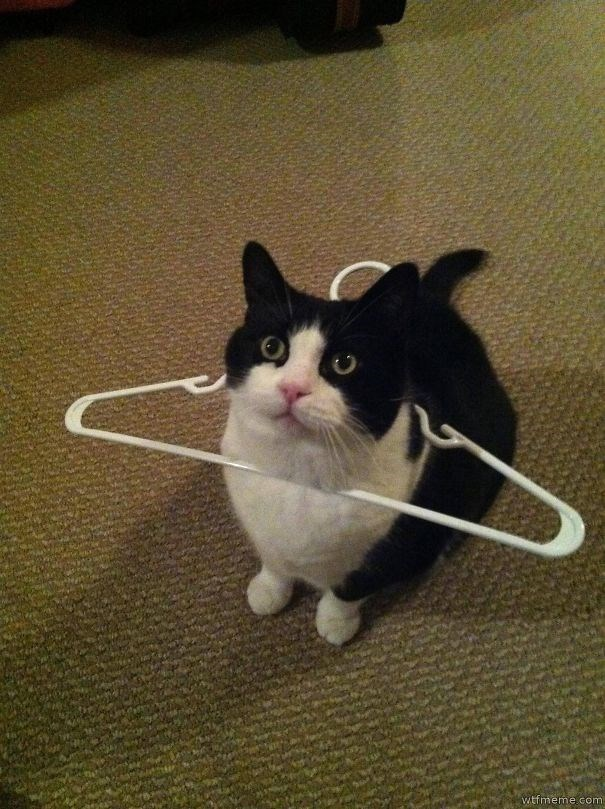 Cat stuck in a hanger