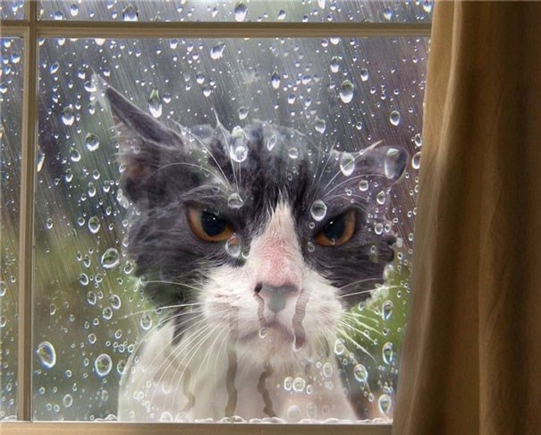 Cat outside the window not happy about the rain