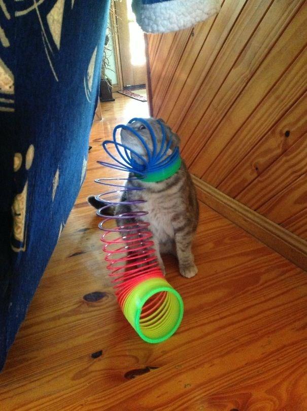 cat with slinky stuck on head standing on hardwood floors