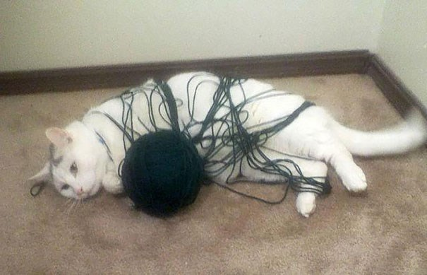Cat with a ball of yarn