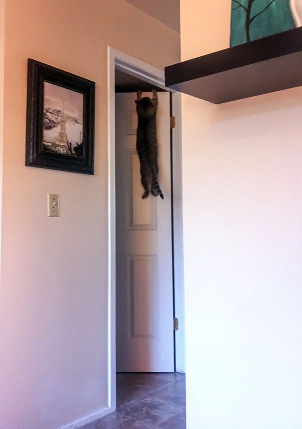 cat hanging out in the doorway to a room