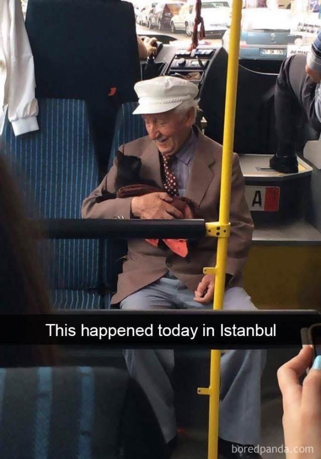 cute cat - A This happened today in Istanbul boredpanda.com