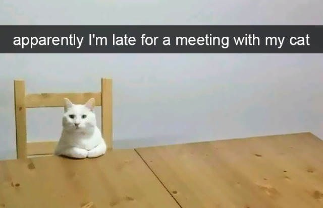 cute cat - Wood - apparently I'm late for a meeting with my cat