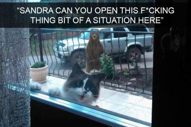 """cute cat - Photo caption - """"SANDRA CAN YOU OPEN THIS F*CKING THING BIT OF A SITUATION HERE"""""""