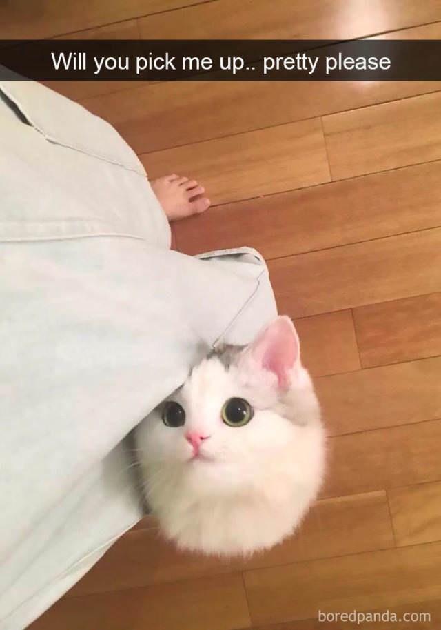 cute cat - Cat - Will you pick me u.. pretty please boredpanda.com