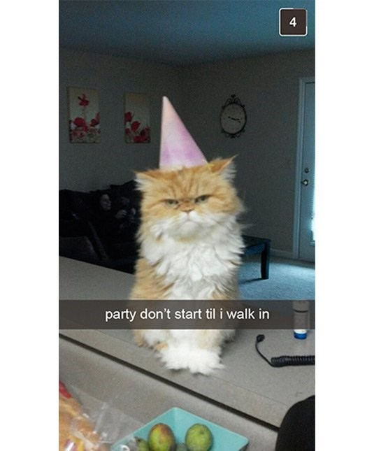 cute cat - Cat - party don't start til i walk in 4