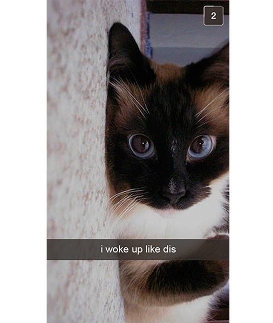 cute cat - Cat - 2 i woke up like dis