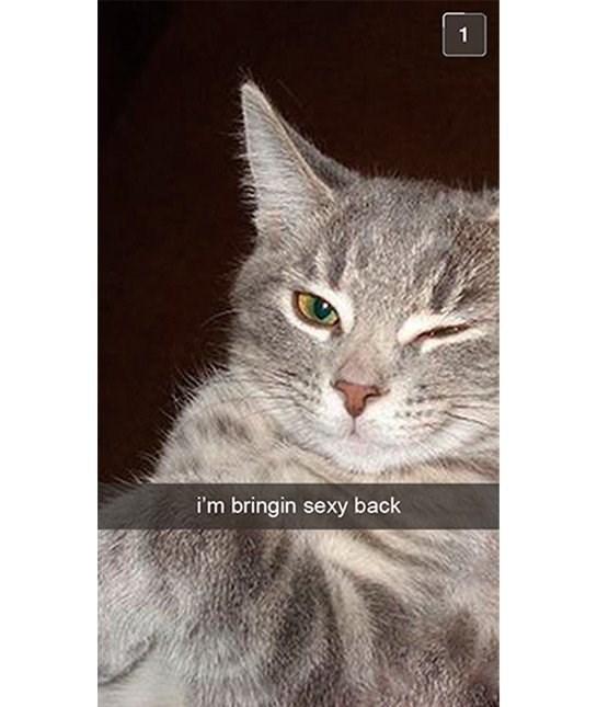 cute cat - Cat - i'm bringin sexy back