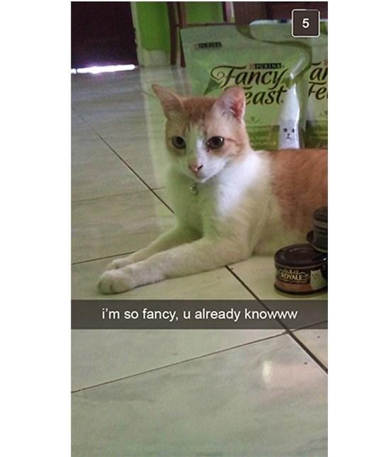cute cat - Cat - 5 al Fancy east Fe OYALE i'm so fancy, u already knowww