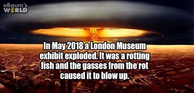 Text - eBaum's WERLD In May 2018 a London Museum exhibit exploded Itwasarotting fish and the gasses from the rot caused it to blow up.