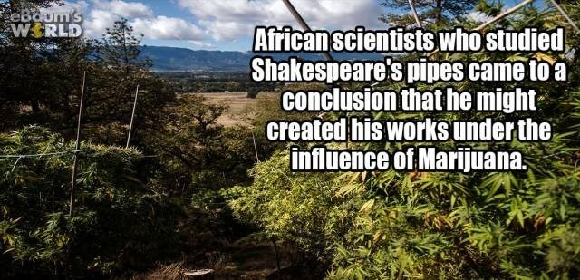 Vegetation - eBaum's WERLD African scientists who studied Shakespeare's pipes came to a conclusion that he might created his works under the influence of Marijuana.