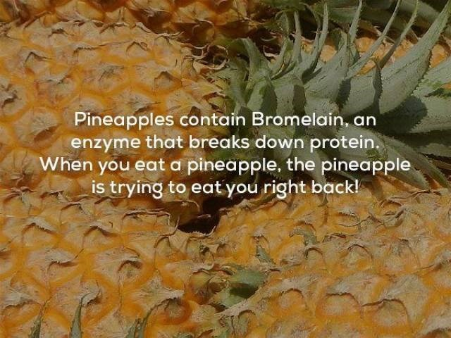 Pineapple - Pineapples contain Bromelain, an enzyme that breaks down protein. When you eat a pineapple. the pineapple is trying to eatyou right back!