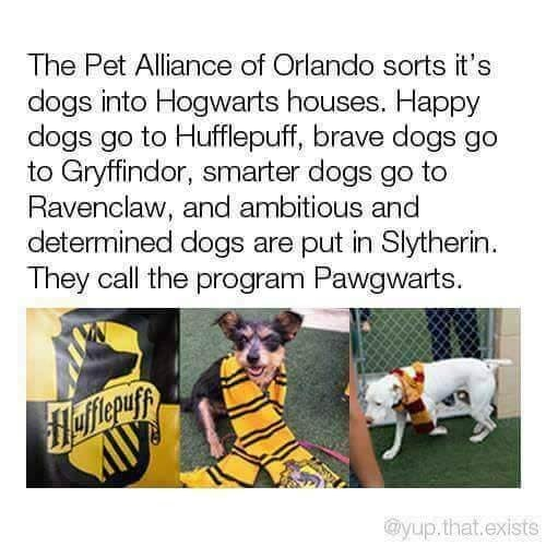 meme - Text - The Pet Alliance of Orlando sorts it's dogs into Hogwarts houses. Happy dogs go to Hufflepuff, brave dogs go to Gryffindor, smarter dogs go to Ravenclaw, and ambitious and determined dogs are put in Slytherin They call the program Pawgwarts. ayup.that.exists