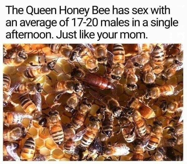Bee - The Queen Honey Bee has sex with an average of 17-20 males in a single afternoon. Just like your mom