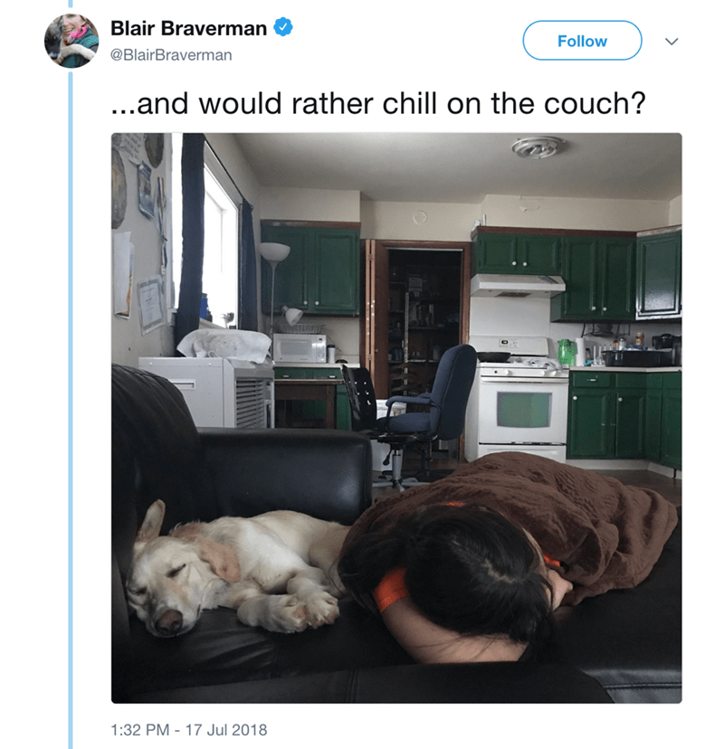 Companion dog - Blair Braverman Follow @BlairBraverman ...and would rather chill on the couch? 1:32 PM 17 Jul 2018
