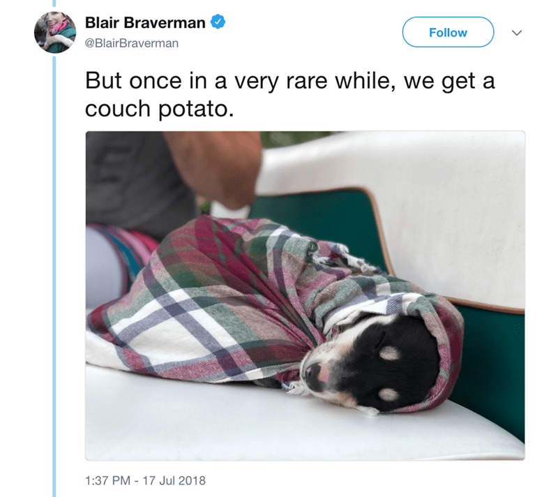 Font - Blair Braverman Follow @BlairBraverman But once in a very rare while, we get a couch potato. 1:37 PM 17 Jul 2018