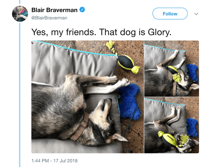 Adaptation - Blair Braverman Follow @BlairBraverman Yes, my friends. That dog is Glory. 1:44 PM 17 Jul 2018