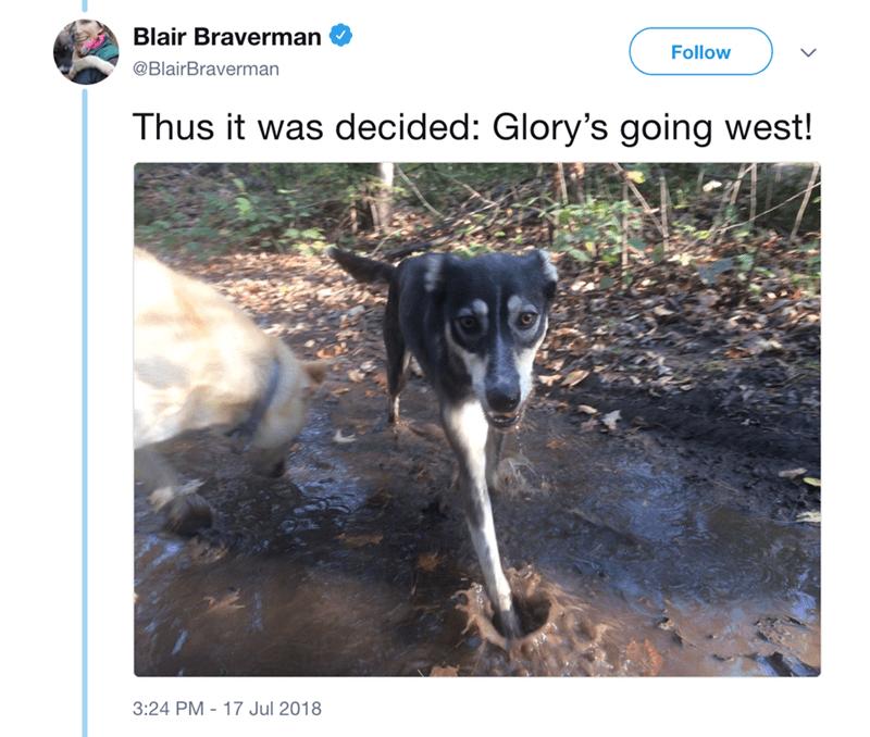 Dog breed - Blair Braverman Follow @BlairBraverman Thus it was decided: Glory's going west! 17 Jul 2018 3:24 PM