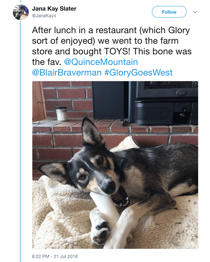 Canidae - Jana Kay Slater @JanaKay4 Follow After lunch in a restaurant (which Glory sort of enjoyed) we went to the farm store and bought TOYS! This bone was the fav. @QuinceMountain @BlairBraverman #GloryGoesWest 6:22 PM 21 Jul 2018