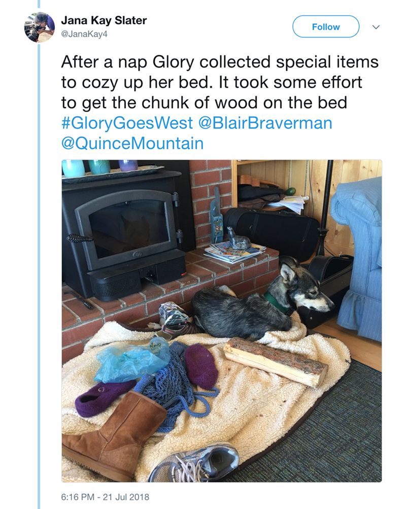 Room - Jana Kay Slater @JanaKay4 Follow After a nap Glory collected special items to cozy up her bed. It took some effort to get the chunk of wood on the bed #GloryGoesWest @BlairBraverman @QuinceMountain Nado 6:16 PM 21 Jul 2018