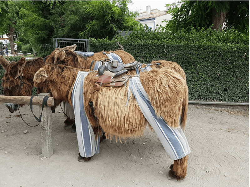 donkey that is wearing pants