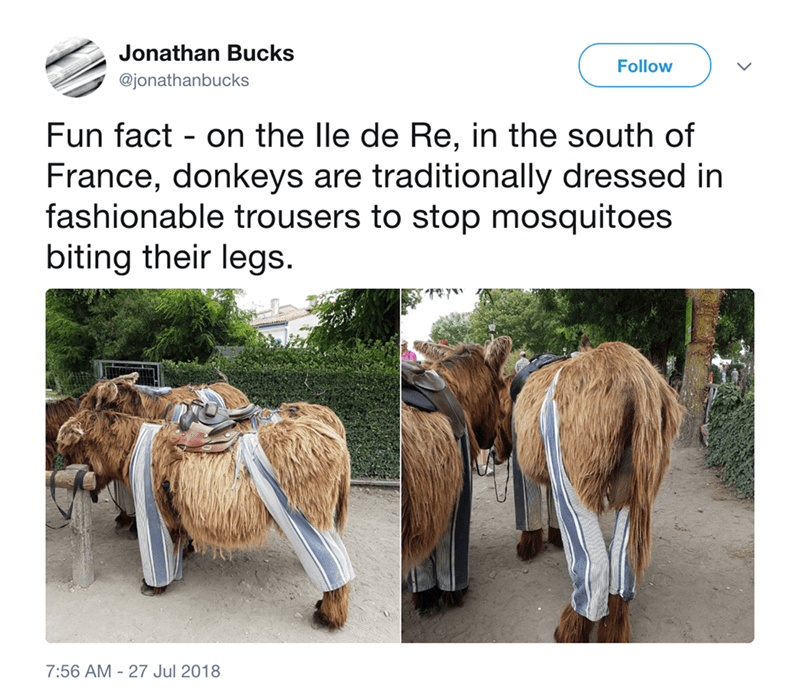 Product - Jonathan Bucks Follow @jonathanbucks Fun fact on the lle de Re, in the south of France, donkeys are traditionally dressed in fashionable trousers to stop mosquitoes biting their legs 7:56 AM - 27 Jul 2018