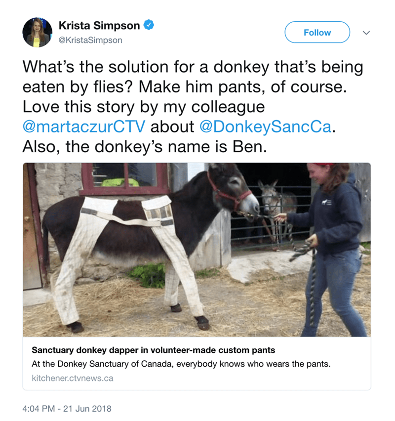 Horse - Krista Simpson Follow @KristaSimpson What's the solution for a donkey that's being eaten by flies? Make him pants, of course. Love this story by my colleague @martaczurCTV about @DonkeySancCa. Also, the donkey's name is Ben. Sanctuary donkey dapper in volunteer-made custom pants At the Donkey Sanctuary of Canada, everybody knows who wears the pants. kitchener.ctvnews.ca 4:04 PM 21 Jun 2018