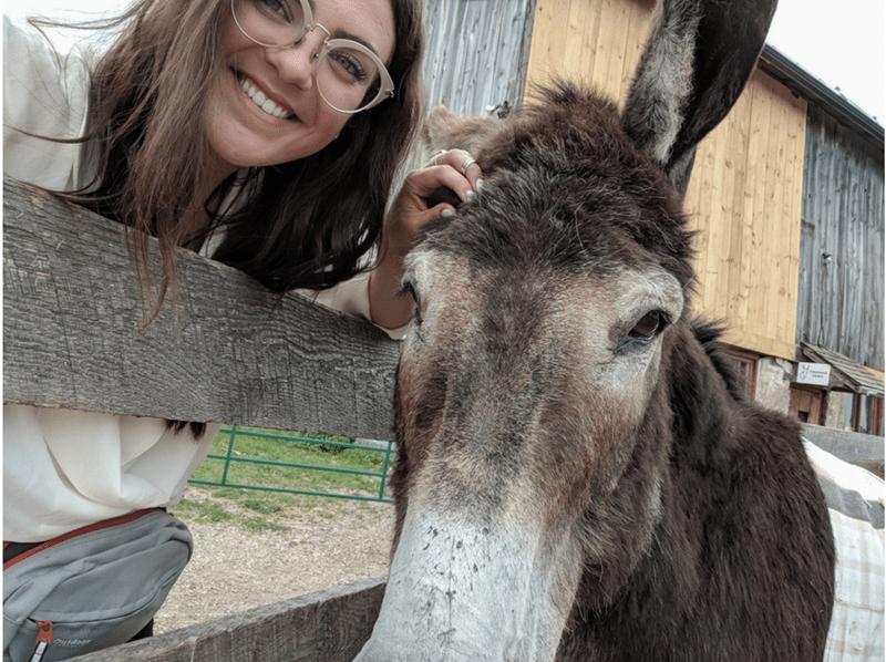 Mammal - Putdoor - donkey