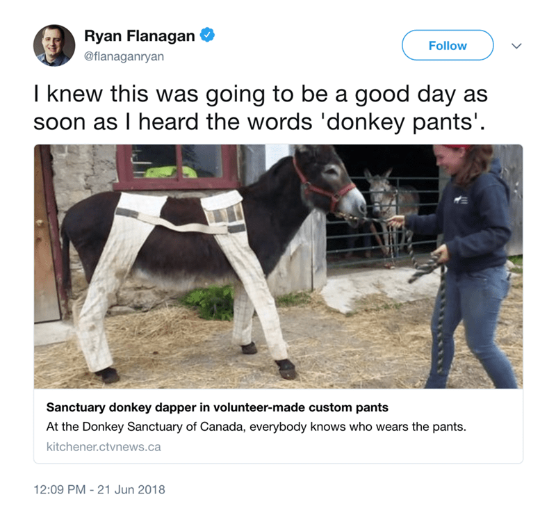 Horse - Ryan Flanagan Follow @flanaganryan I knew this was going to be a good day as soon as I heard the words 'donkey pants'. Sanctuary donkey dapper in volunteer-made custom pants At the Donkey Sanctuary of Canada, everybody knows who wears the pants. kitchener.ctvnews.ca 12:09 PM 21 Jun 2018